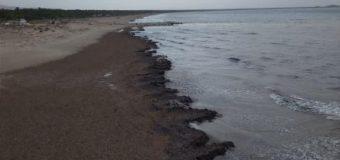 Φύκια «σκέπασαν» την άμμο της Καλογριάς – ΦΩΤΟ