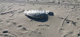 Νεκρή θαλάσσια χελώνα στην Καλόγρια – ΦΩΤΟ