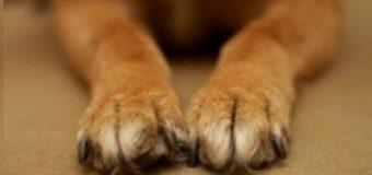 """Τί υποστηρίζει ο σύλλογος """"Φιλόζωοι Εθελοντές Πάτρας"""" για τα σκυλιά που βρέθηκαν σε έκταση στη Δυτική Αχαΐα"""